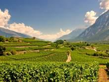HRS Deals Entdecken Sie die Schweizer Weingärten